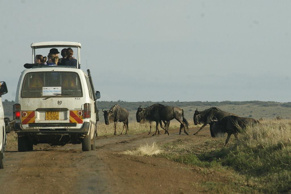Safari en Afrique : 2 destinations à ne surtout pas manquer