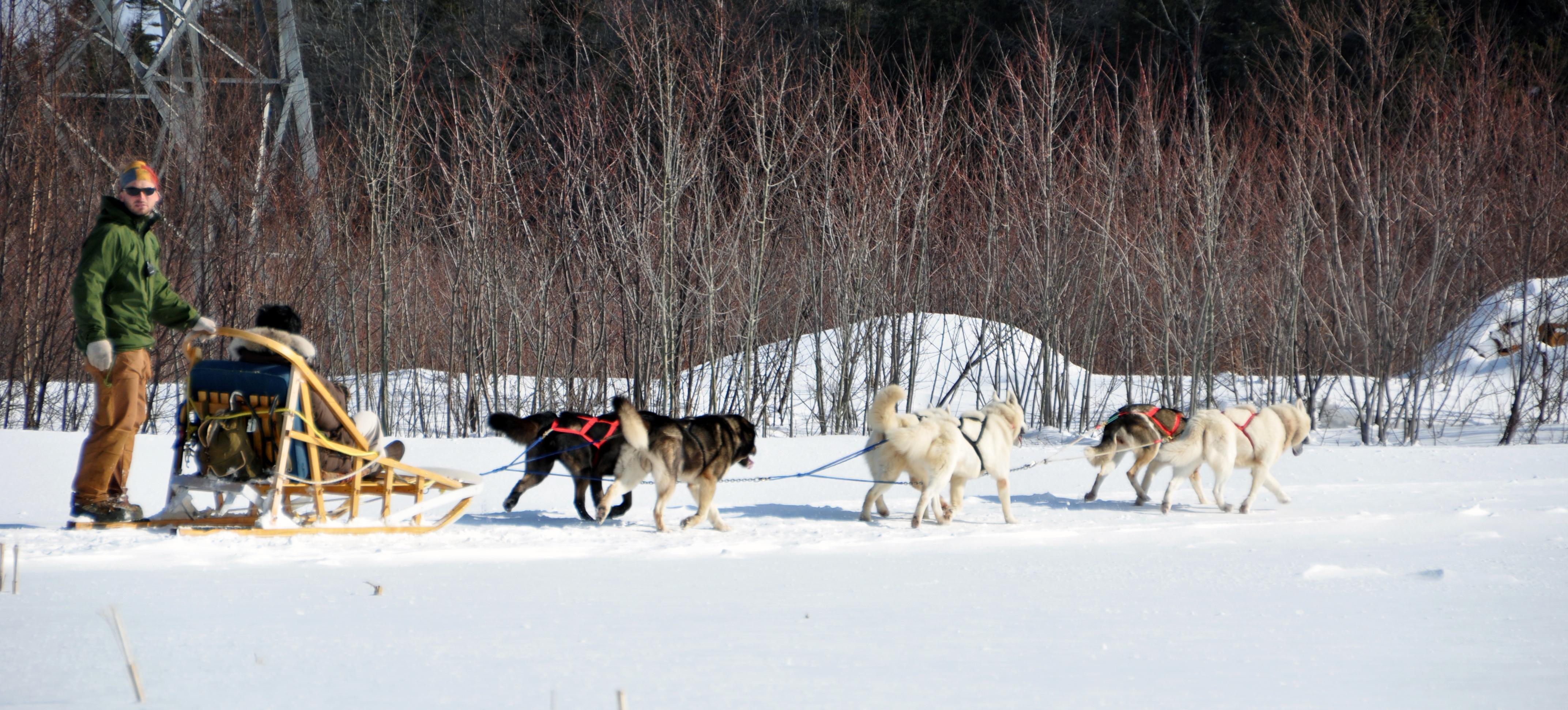Expédition en traîneau à chiens au Québec