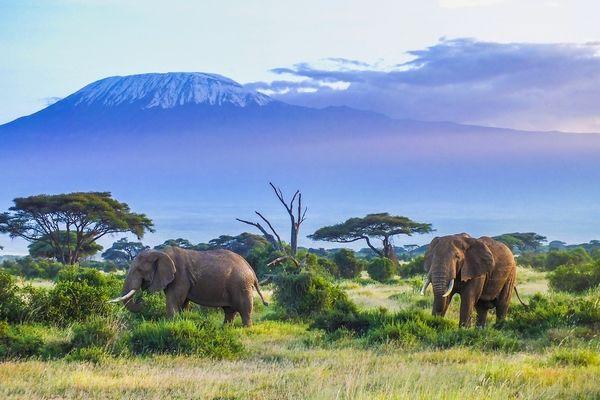 Tout ce qu'il faut savoir avant de partir en voyage en Tanzanie